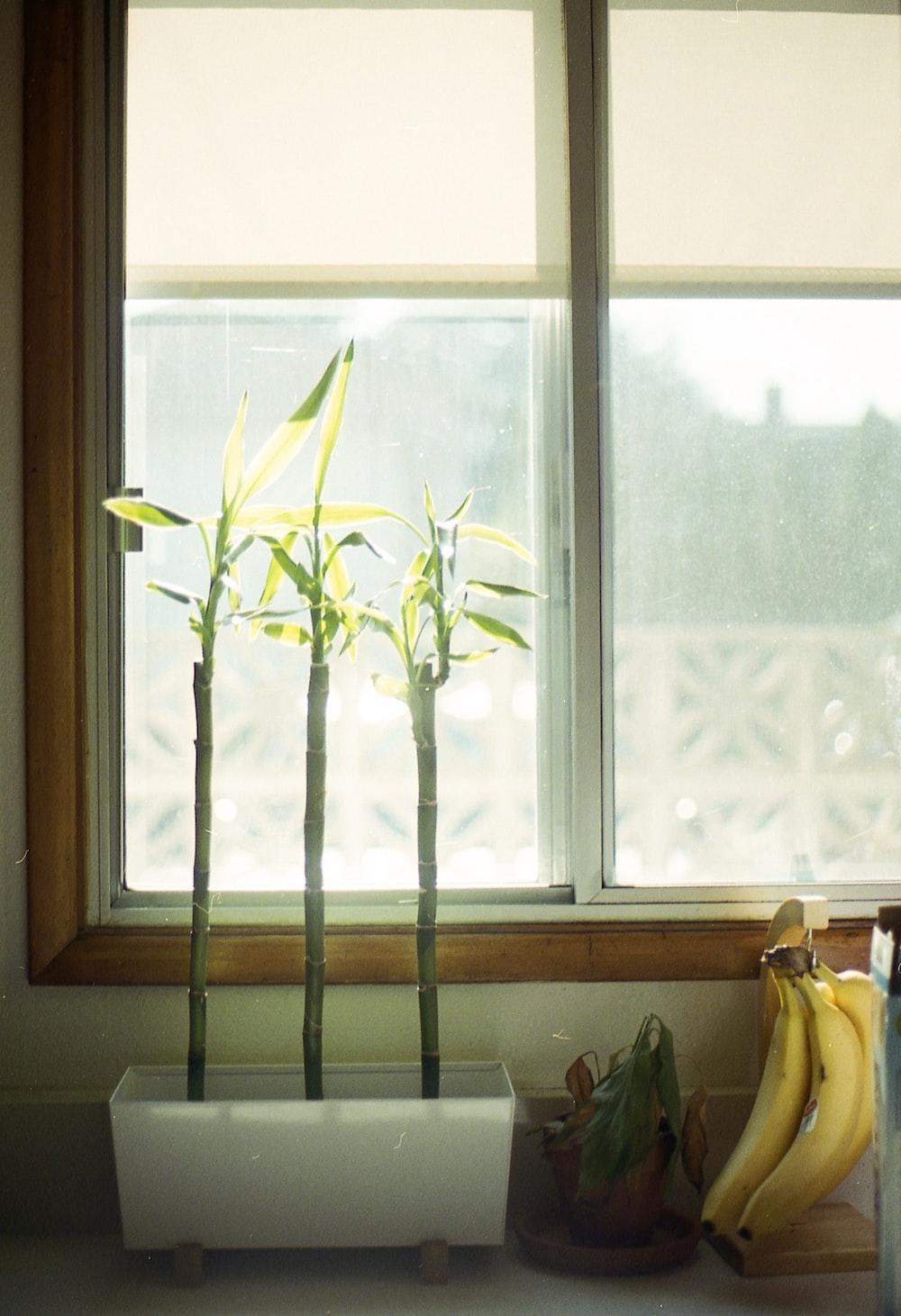 green plants beside window