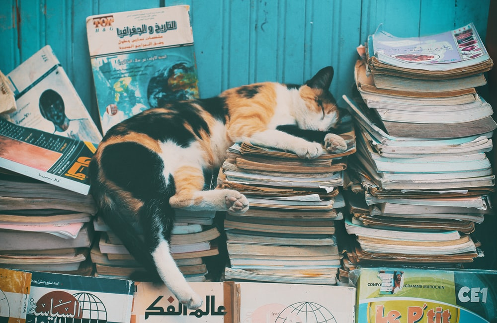 calico cat sleeping on books
