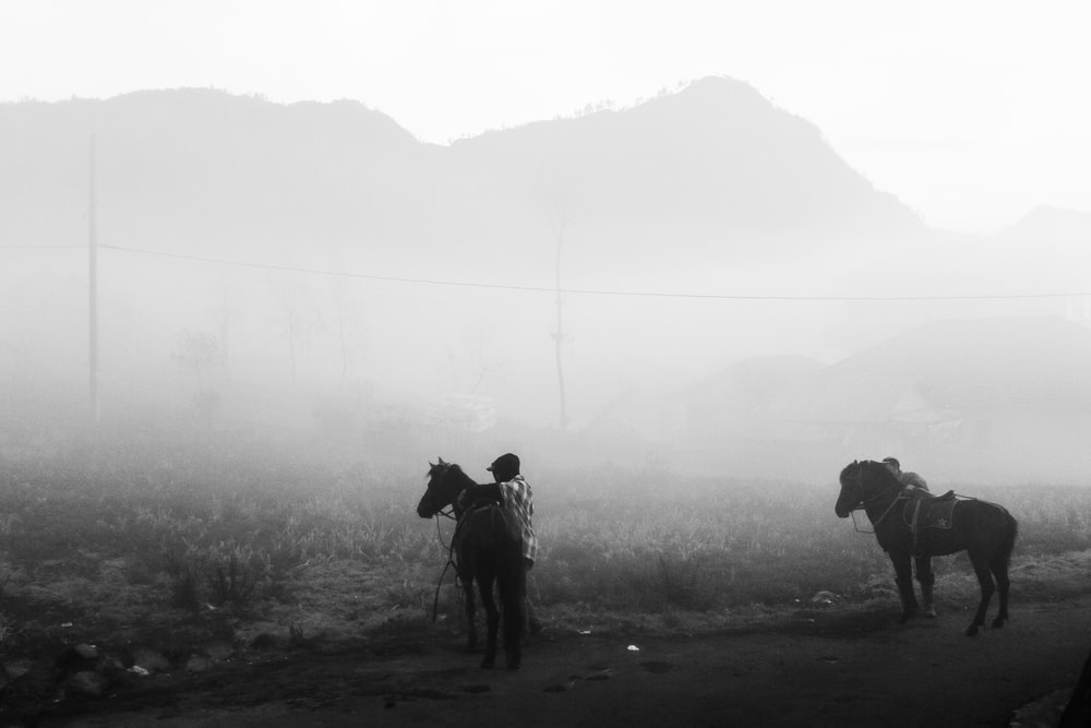 person standing beside horse