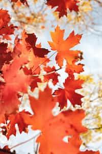 Autumn Evening short story stories