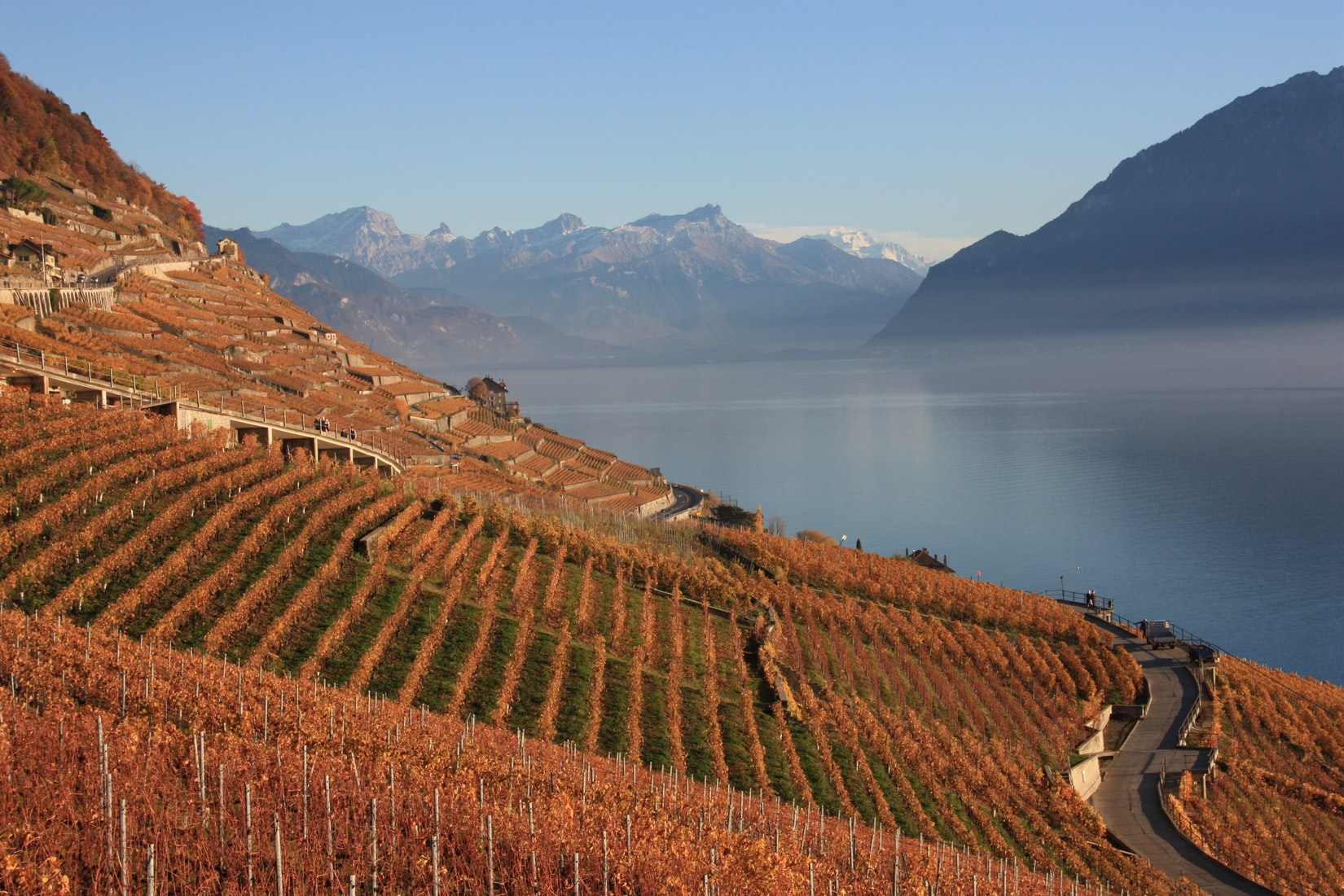 German Winemakers See Boon in Climate Change