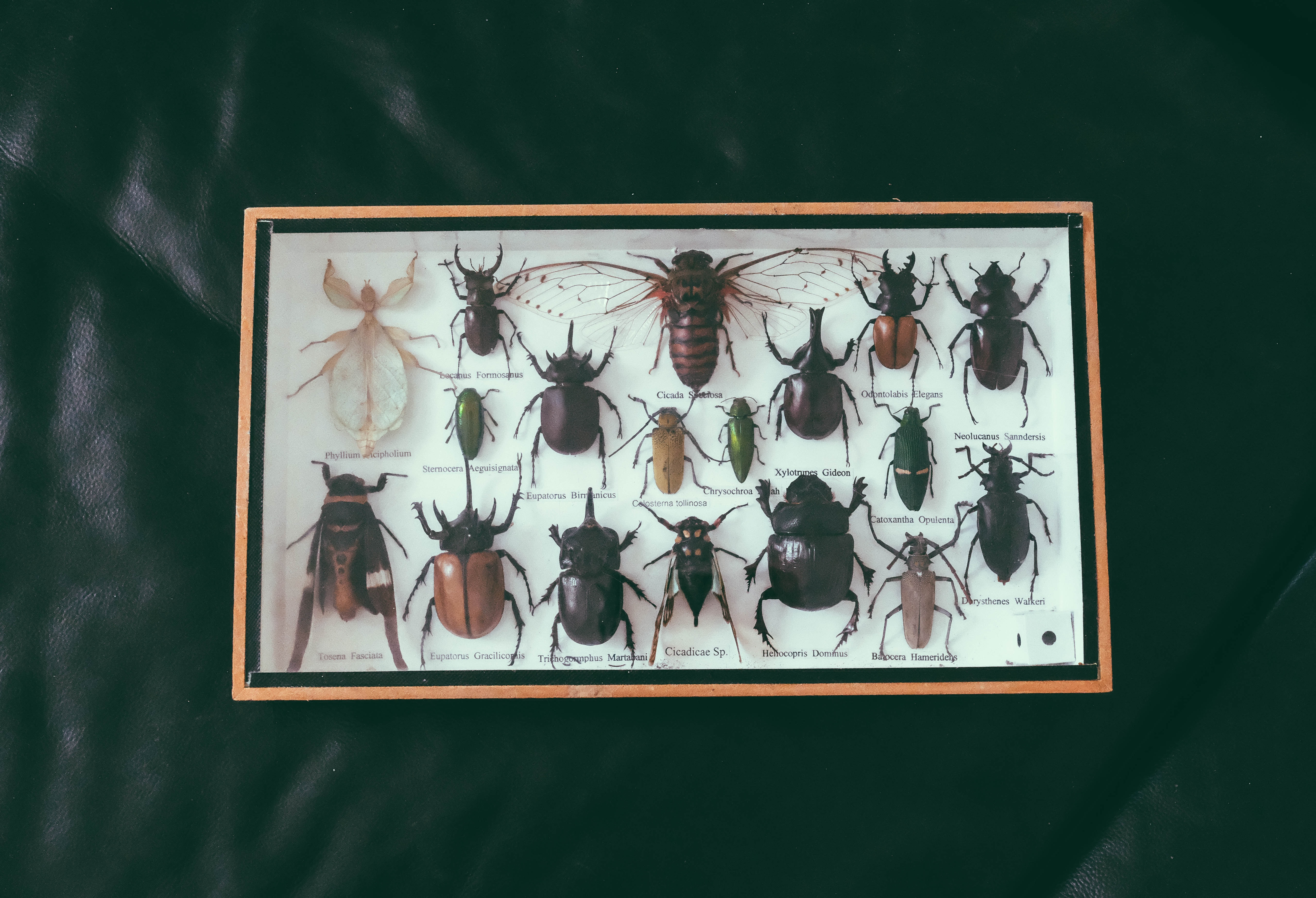 shadowbox of assorted beetles