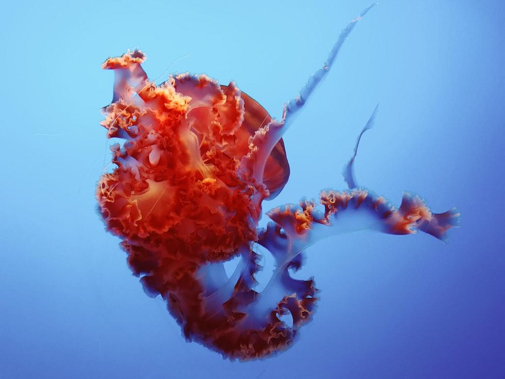orange and purple sea creature underwater