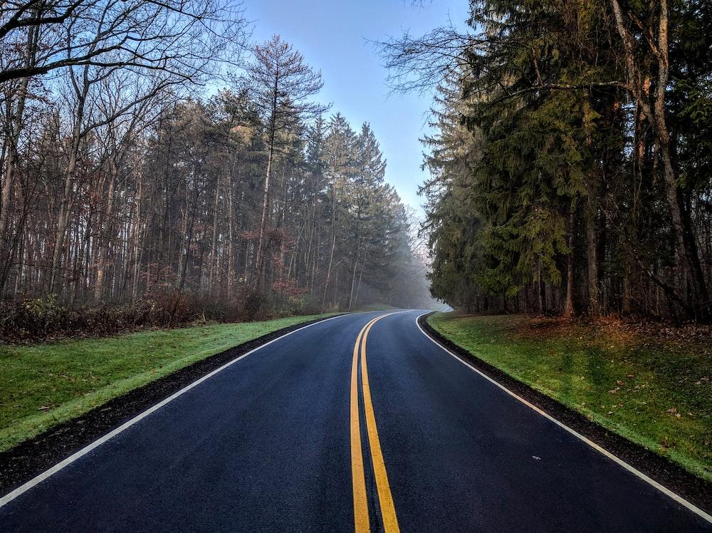 trees beside asphalt road