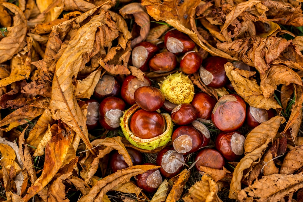 dried leaves with nuts