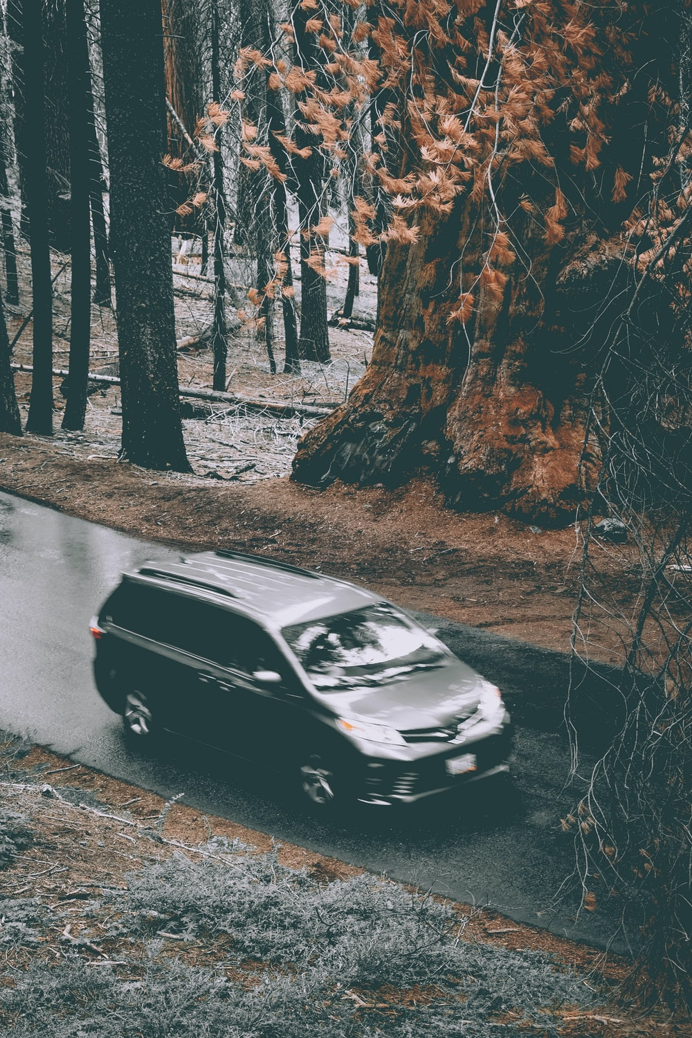 grey Toyota Sienna on wet road near forest trees