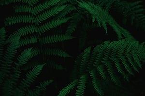 1608. Növények világa