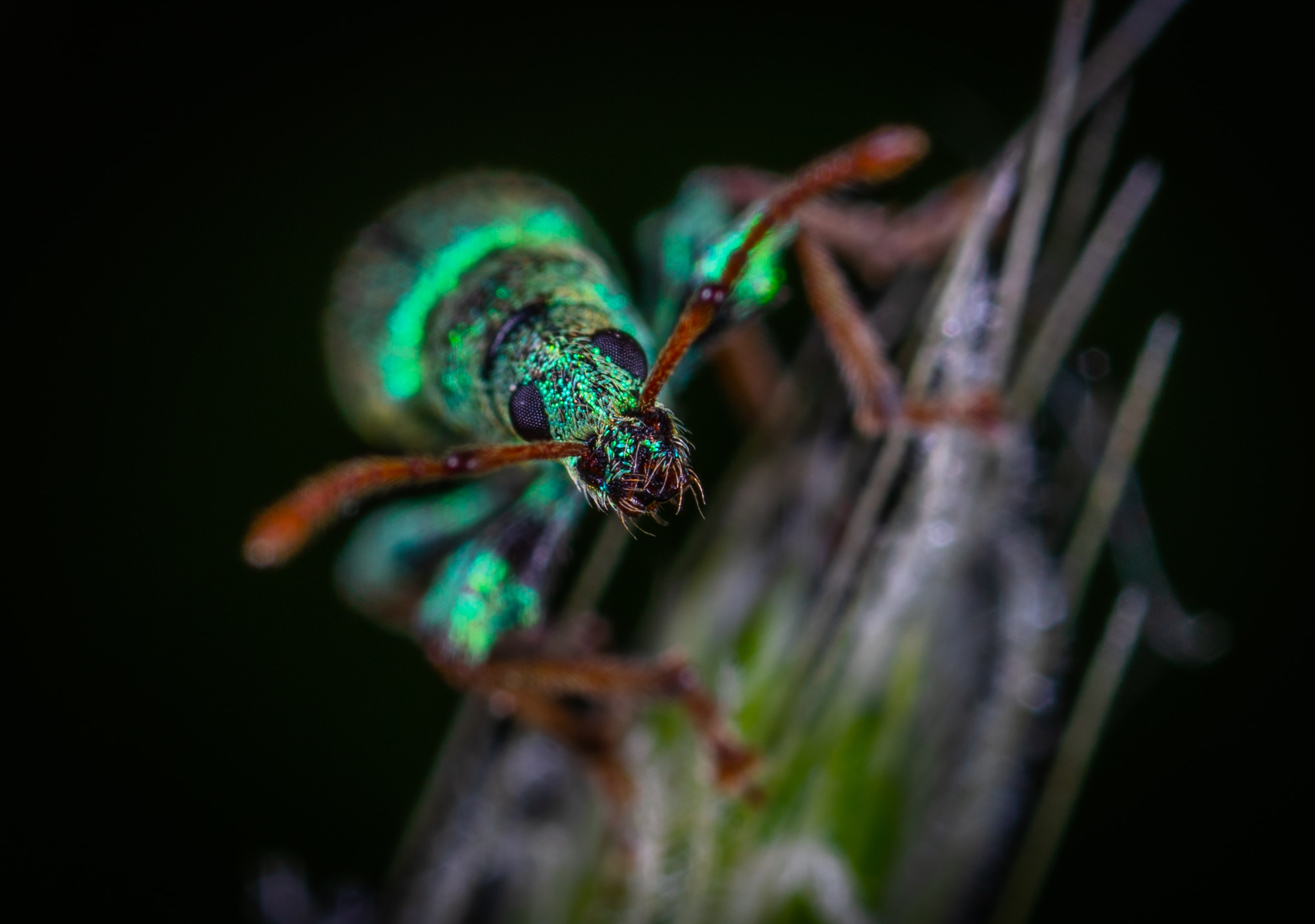 green insect on grass