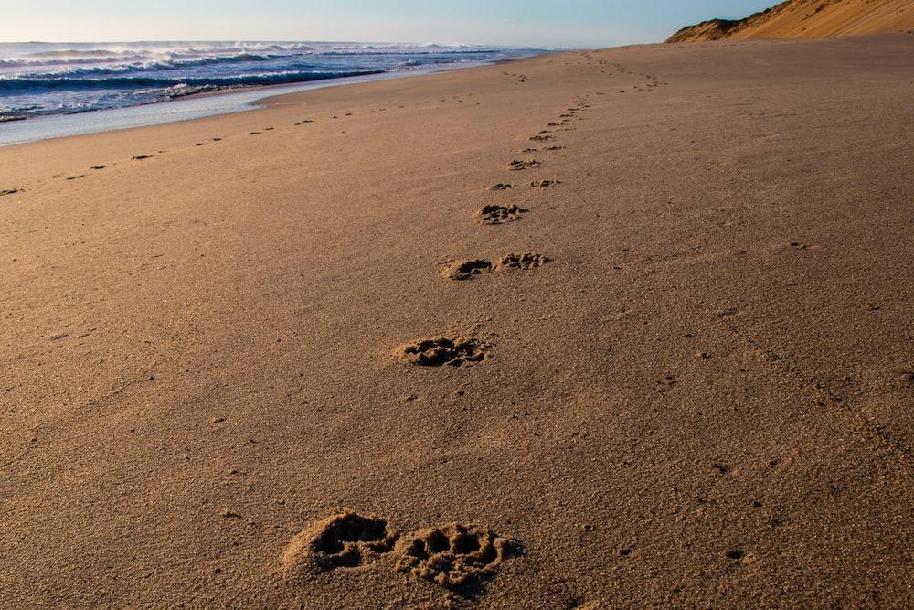 pawprints on sand during daytime