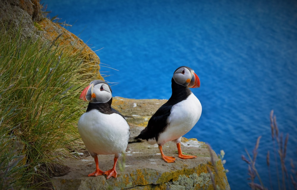 two birds perching on cliff