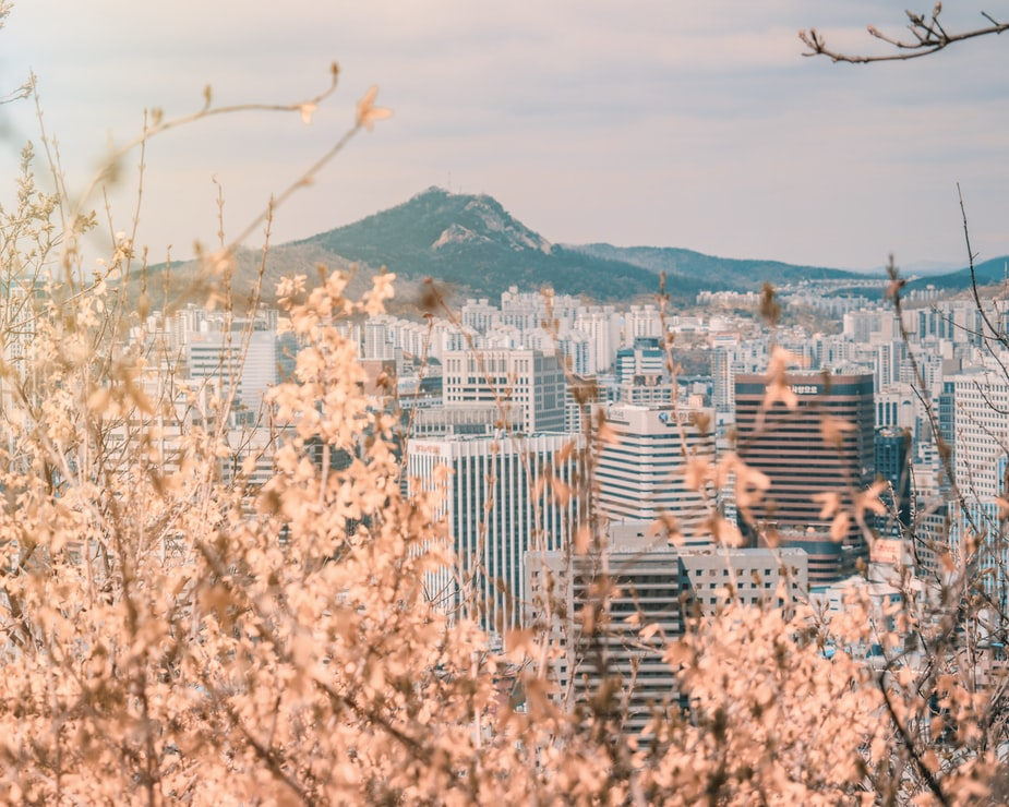 Cherry blossom branches obscuring the view of Seoul, South Korea.
