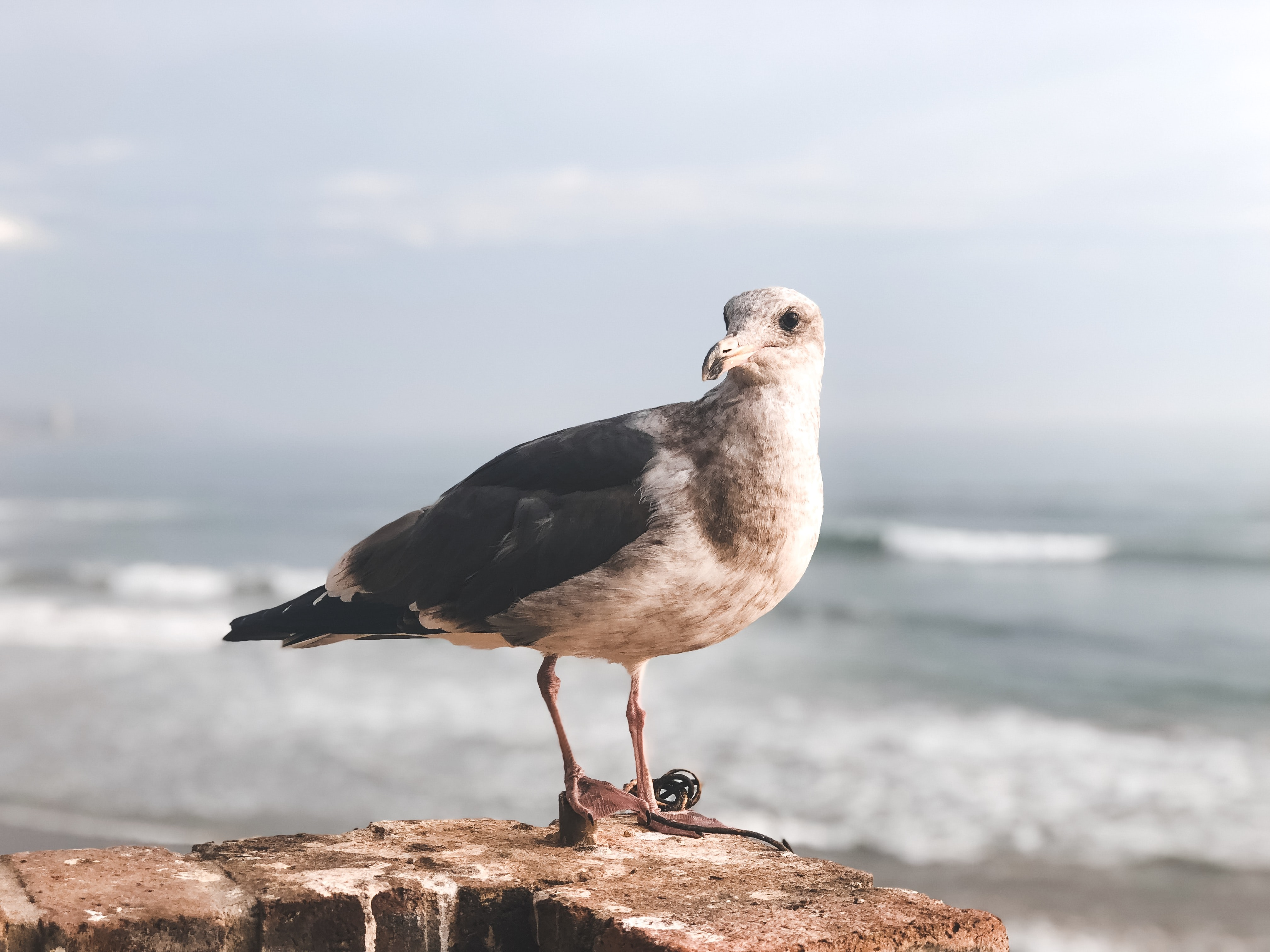 selective focus photography of gull