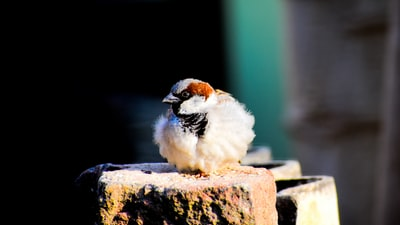 ranchi white bird sitting on rock