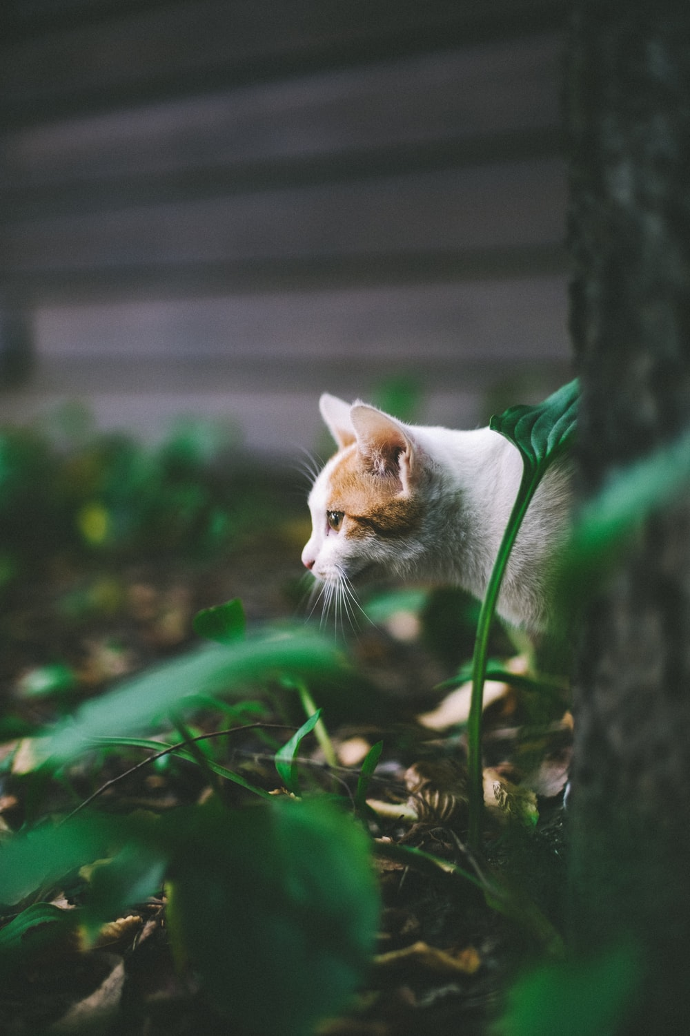 white and brown fur cat
