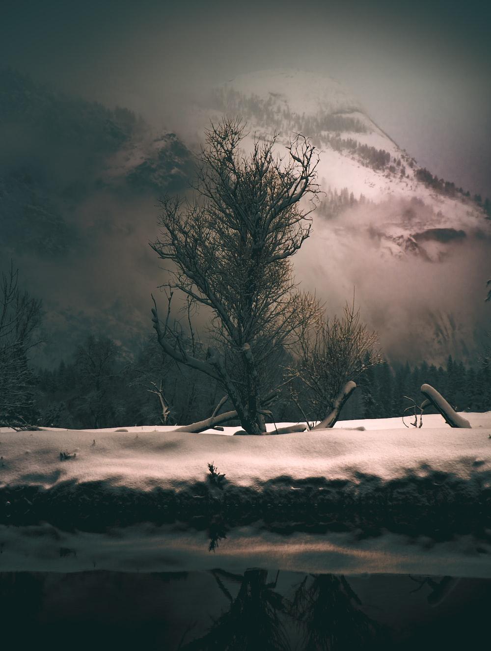 bare tree near snow capped mountain