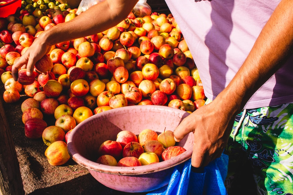 person holding basin with apple fruits
