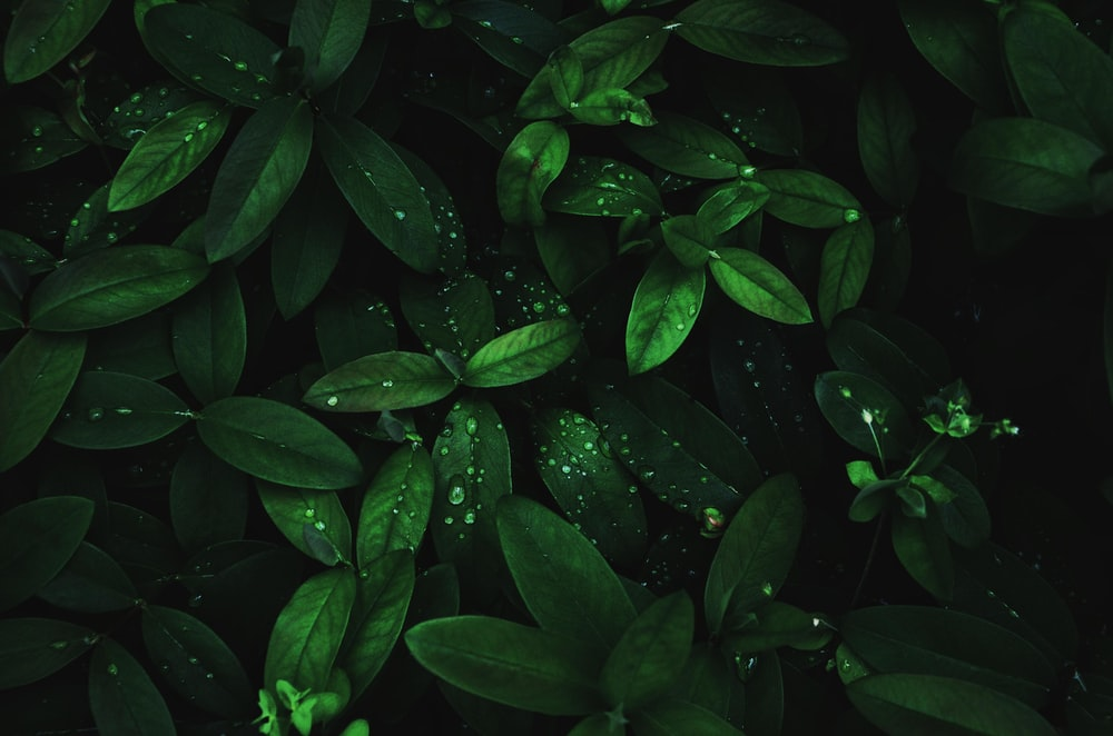 green-leafed plant wallpaper