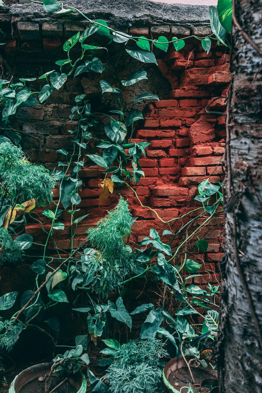 green vines on brown brick wall