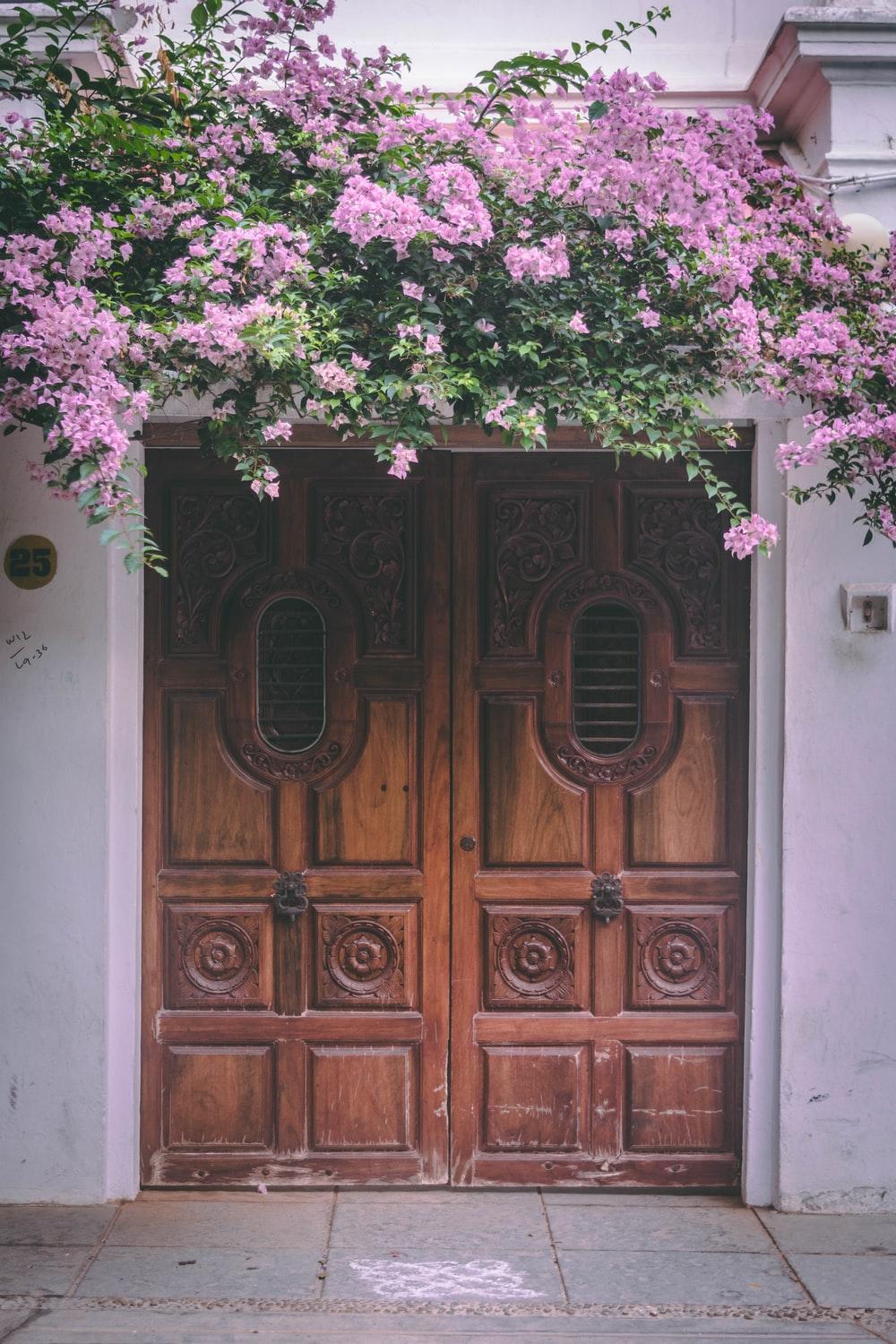 pink bougainvillea flowers above closed doors