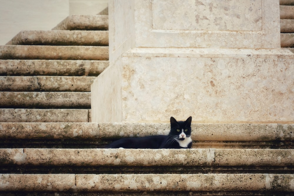 tuxedo cat hiding on stairs