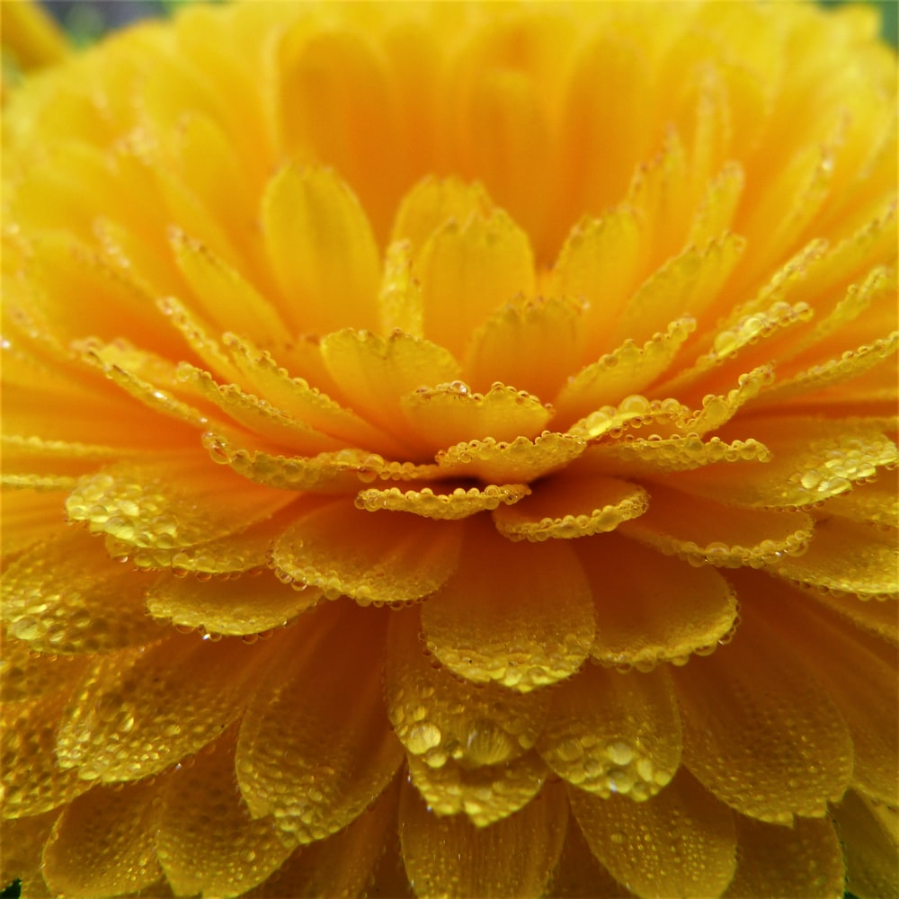 close-up photography of yellow-petaled flower