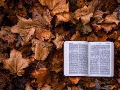 open book on dry leaves bible teams background