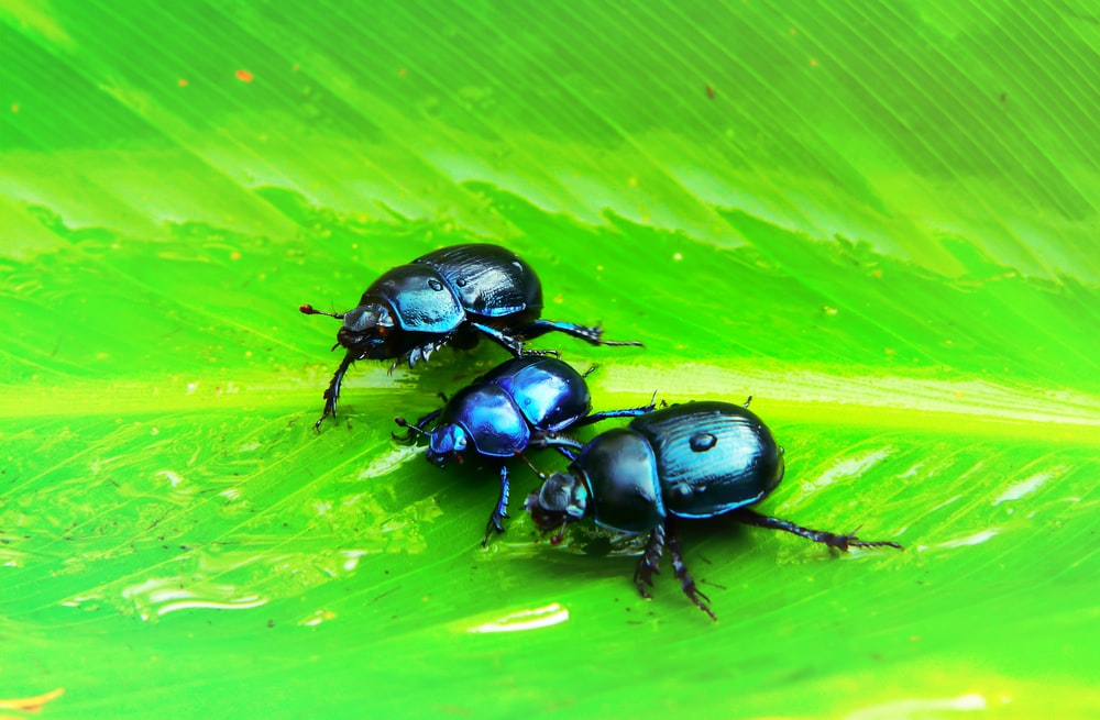 three black insects on green leaf