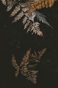 brown plants