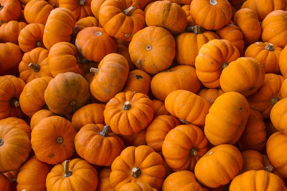 orange squash plant lot