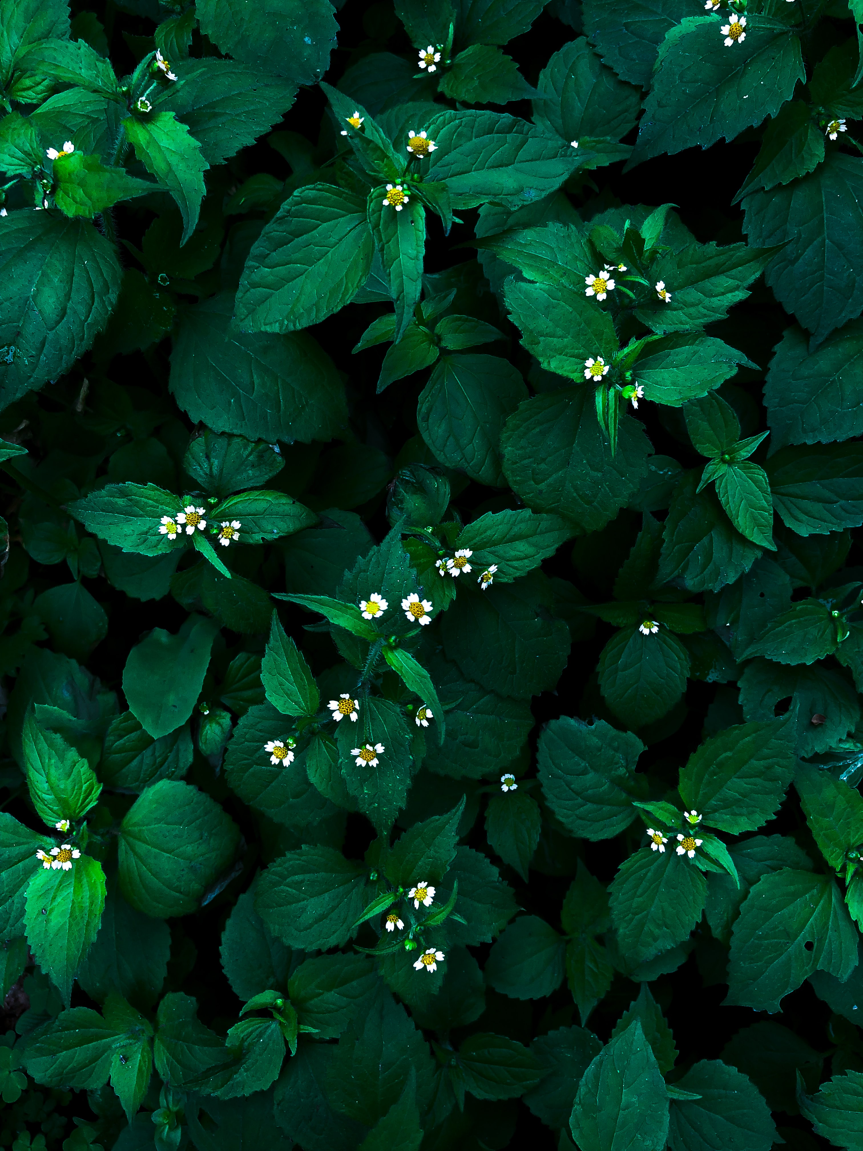 green leafed-plants