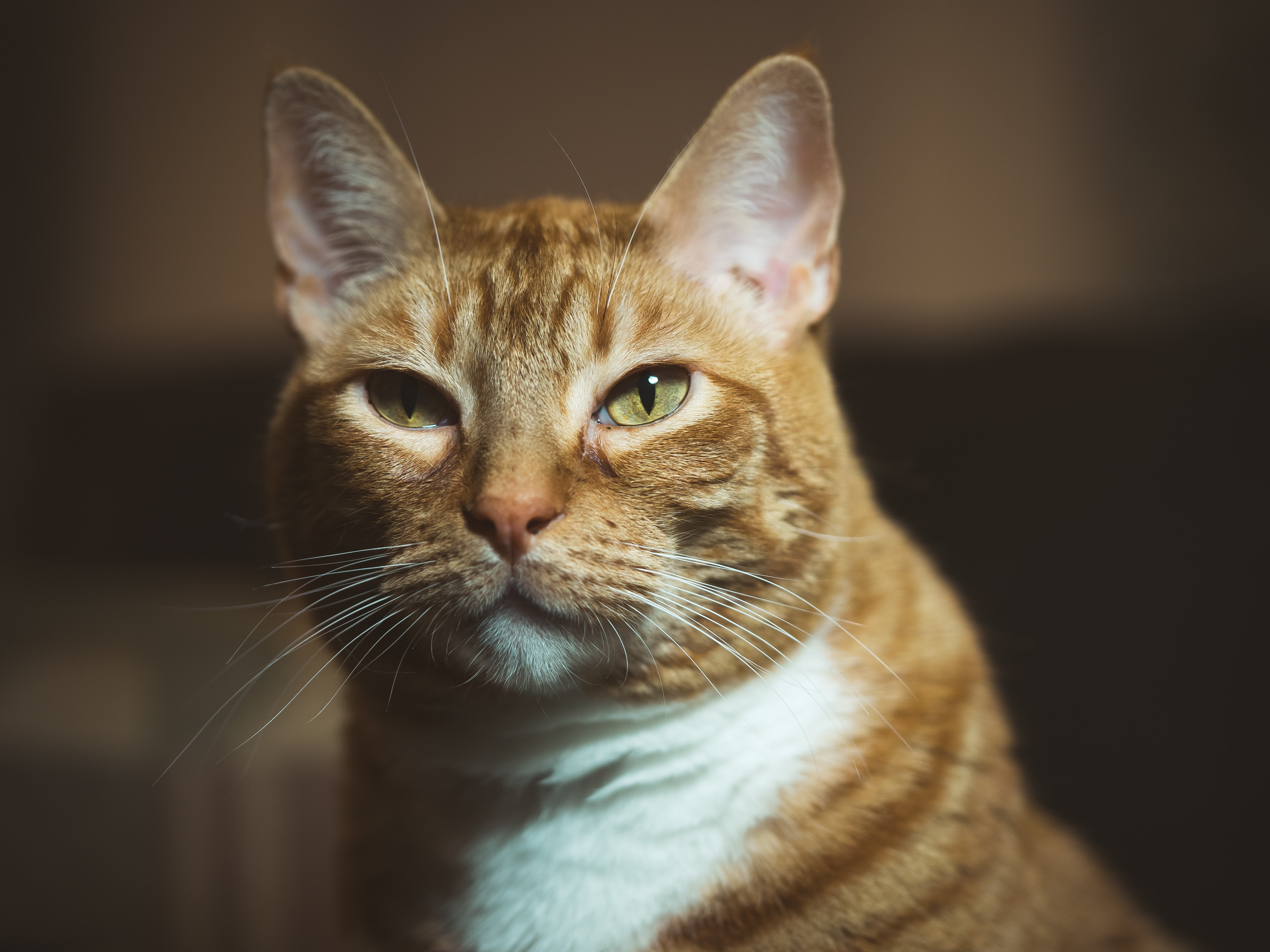 brown tabby cat in shallow focus shot