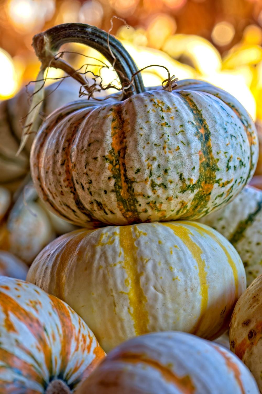 close-up photography of pumpkins