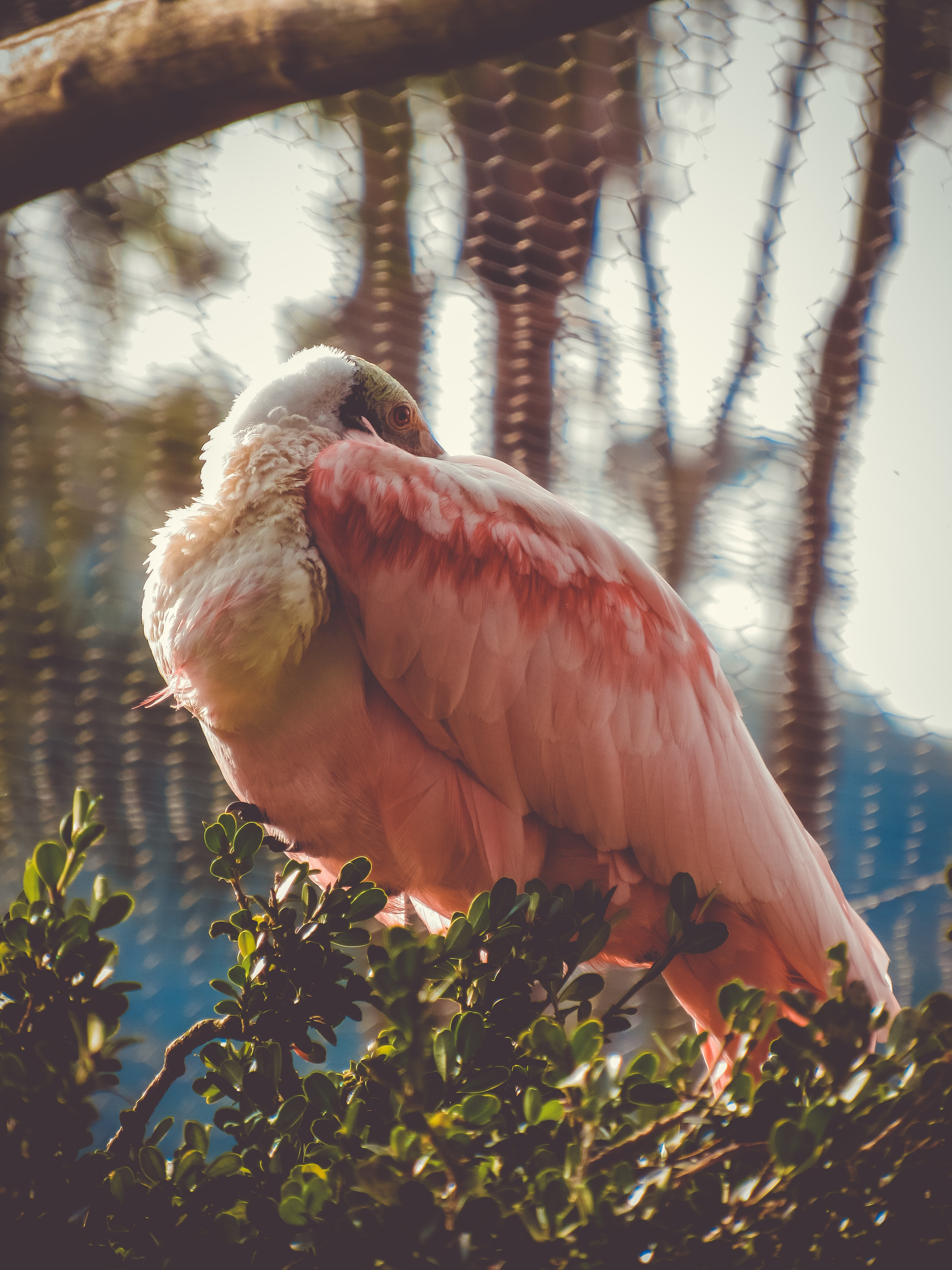 selective focus photo of pink and white flamingo