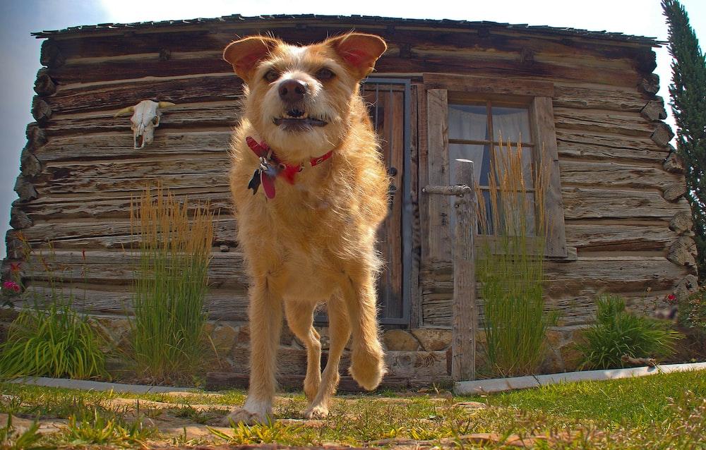 dog running at daytime