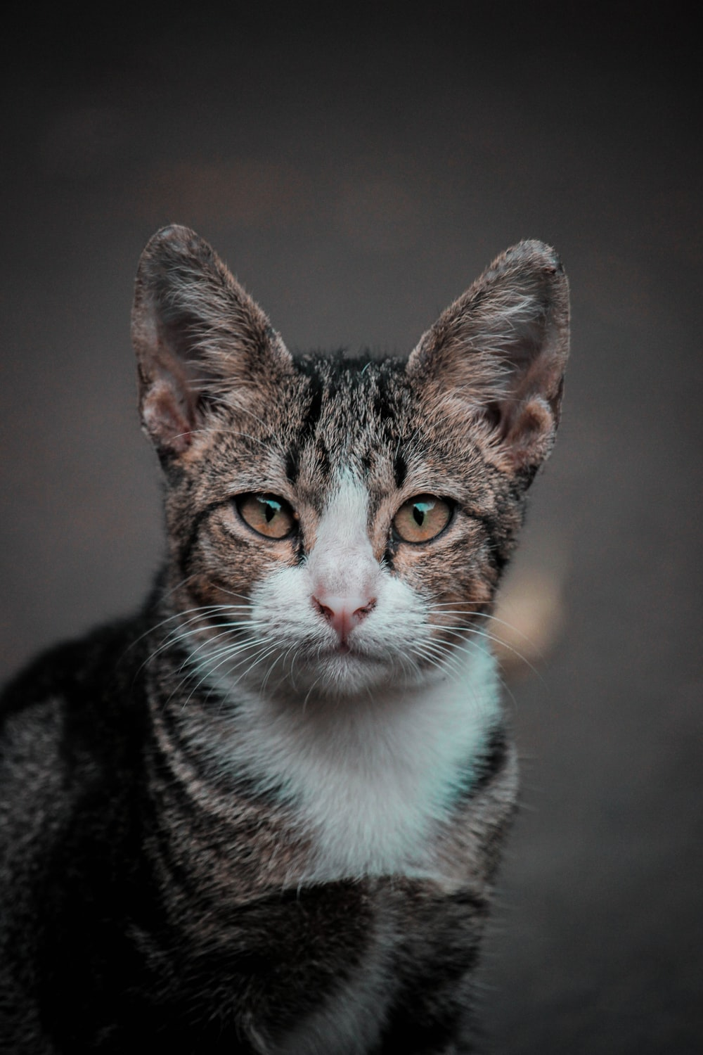 selective focus photo of brown tabby cat