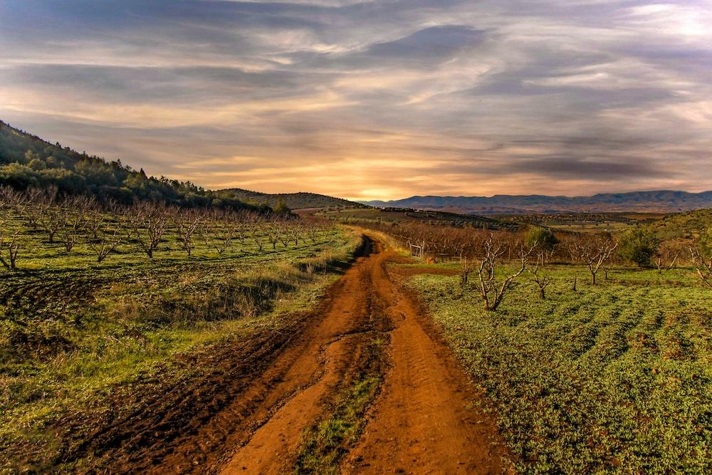 empty farm road under gray sky