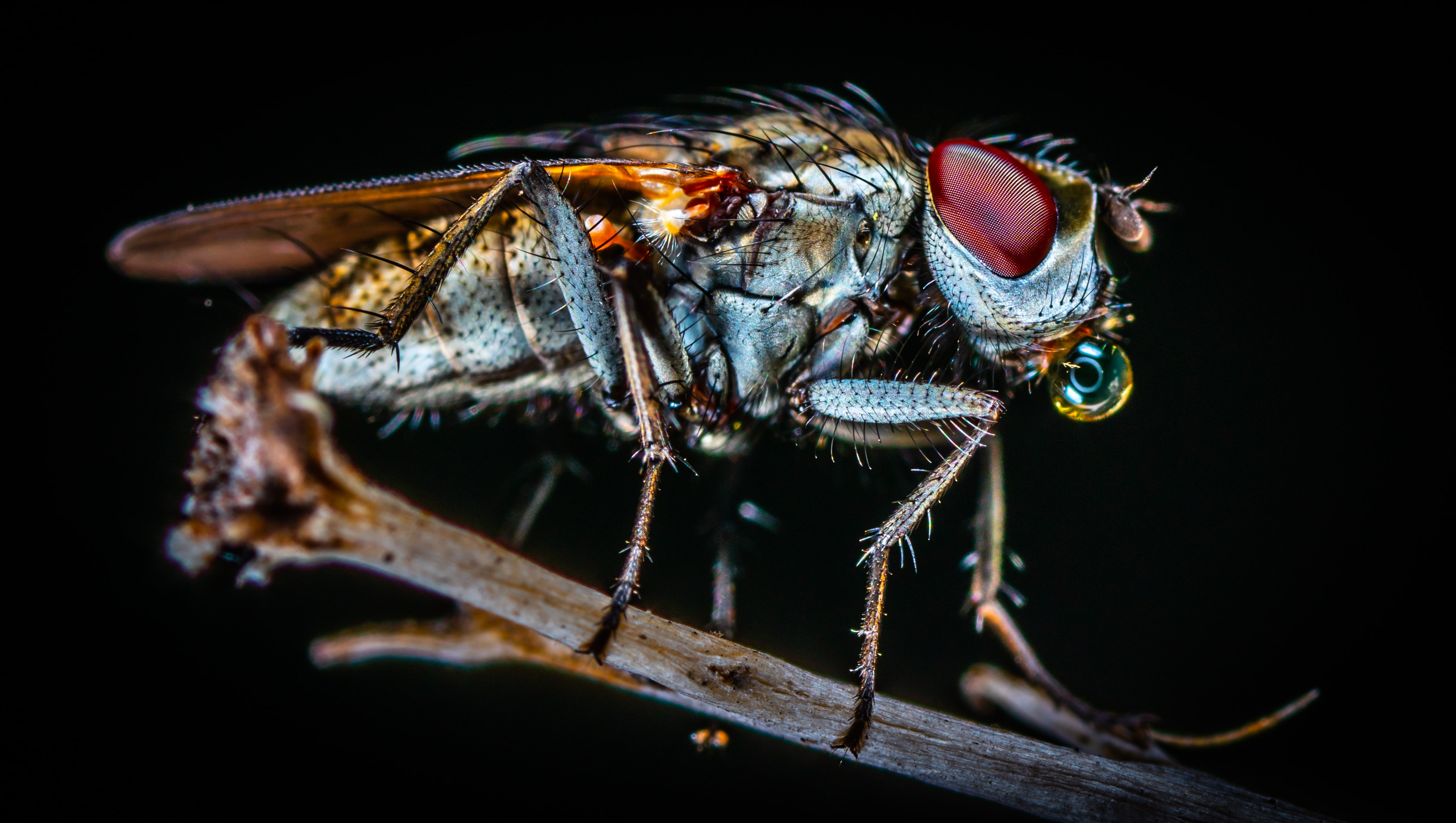 closeup photo of fly