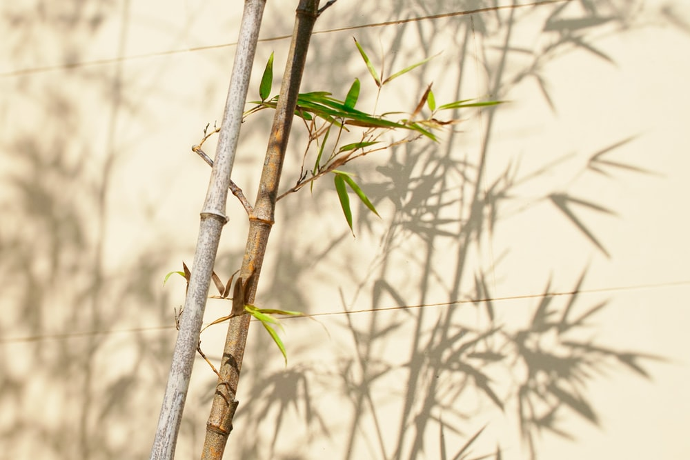 green-leafed bamboo plant near white wall