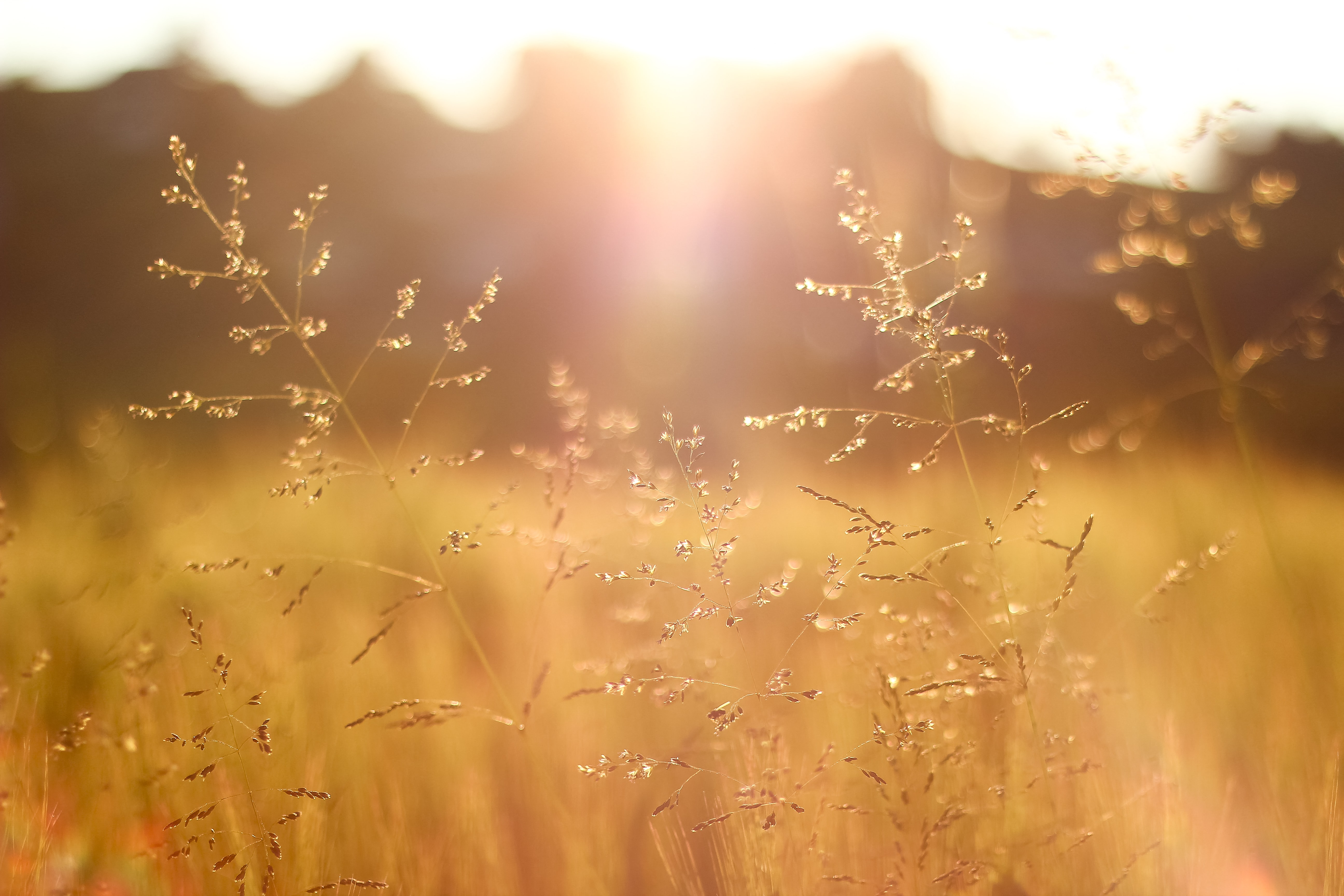 shallow focus photography of grass field