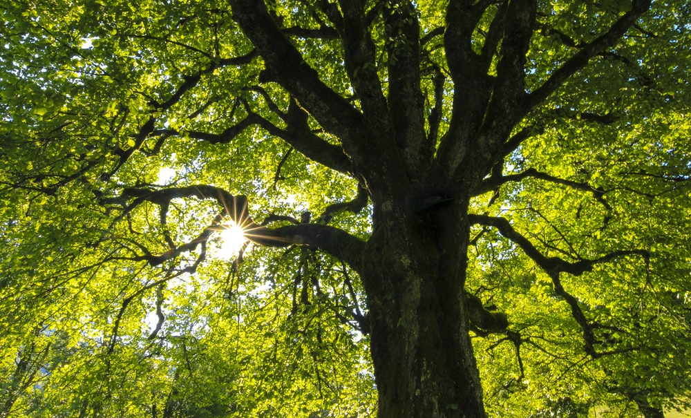 green-leafed tree at daytime