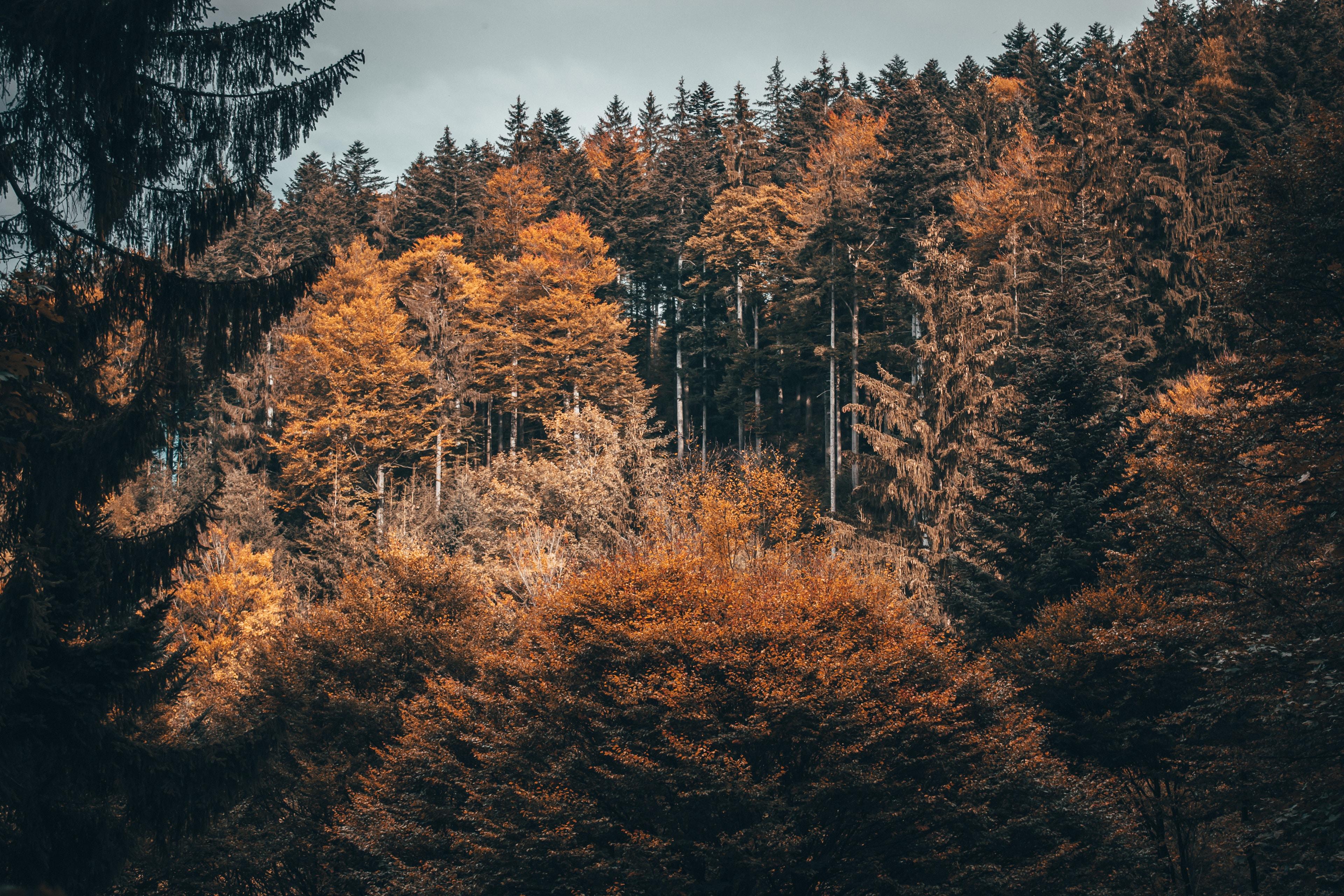 landscape photograph of forest