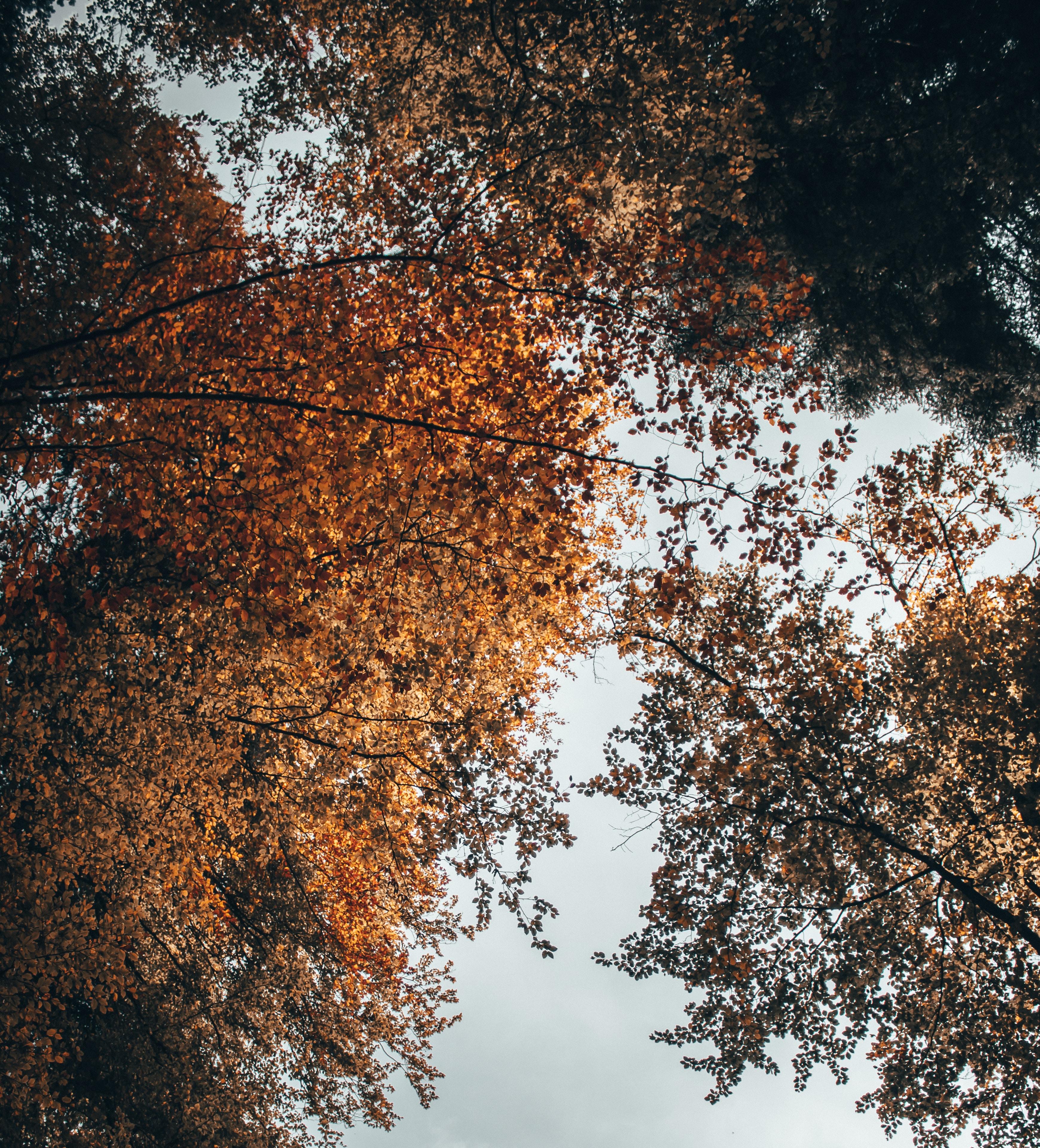 brown dried tree leaves