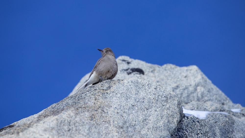 low-angle photography of gray bird
