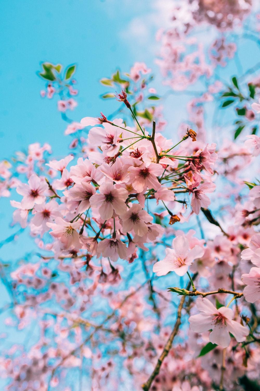 pink petaled flower bloom during daytime