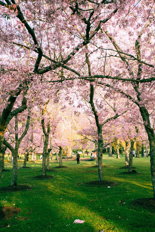 pink tree during daytime