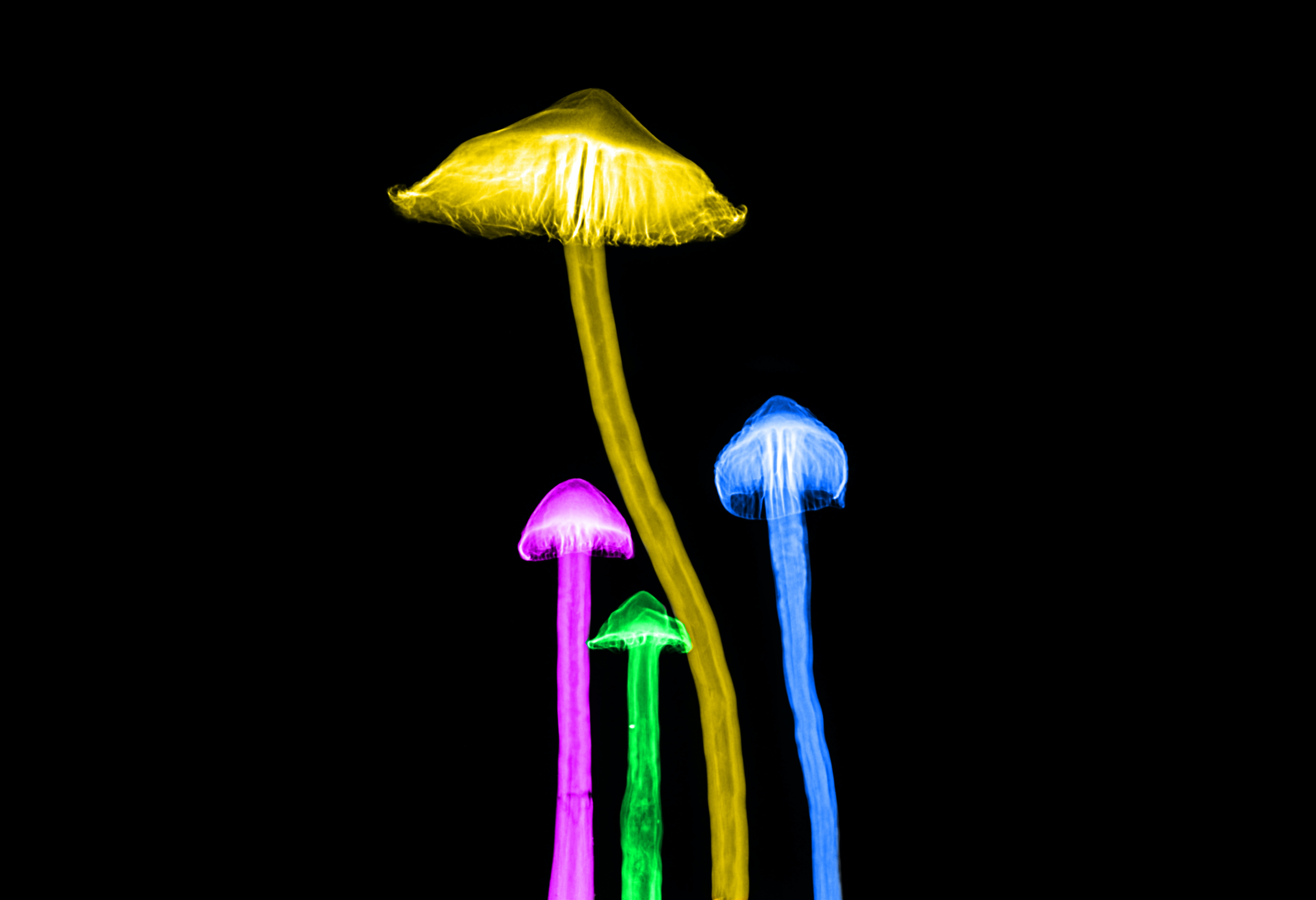 four multicolored mushrooms illustration
