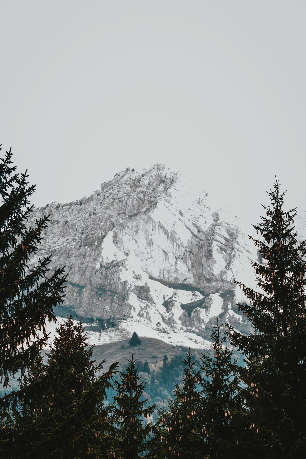 ice-capped mountains near tree at daytime
