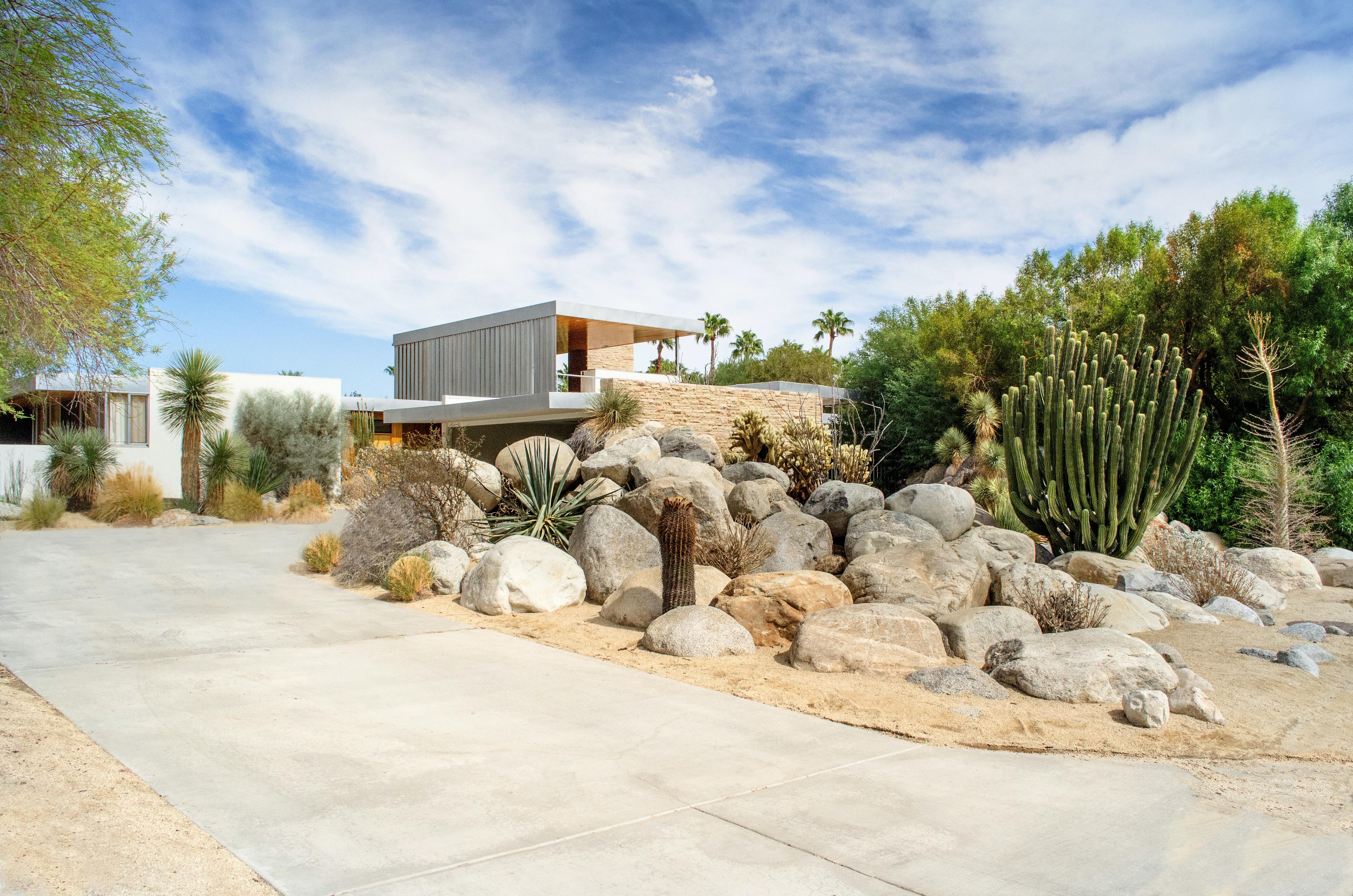 cacti beside rocks