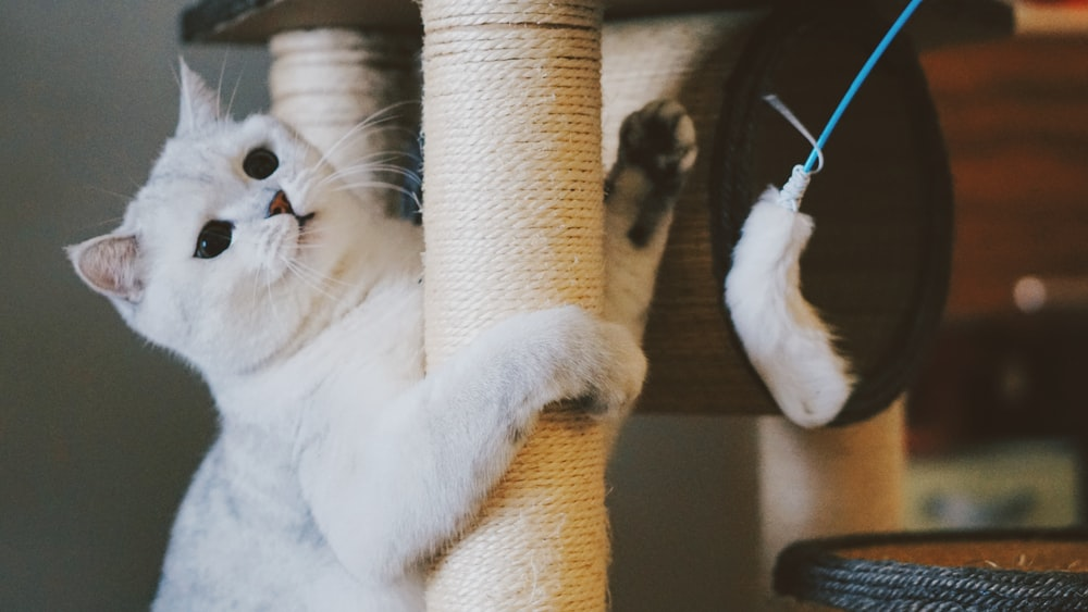 cat scratching on white cat tree