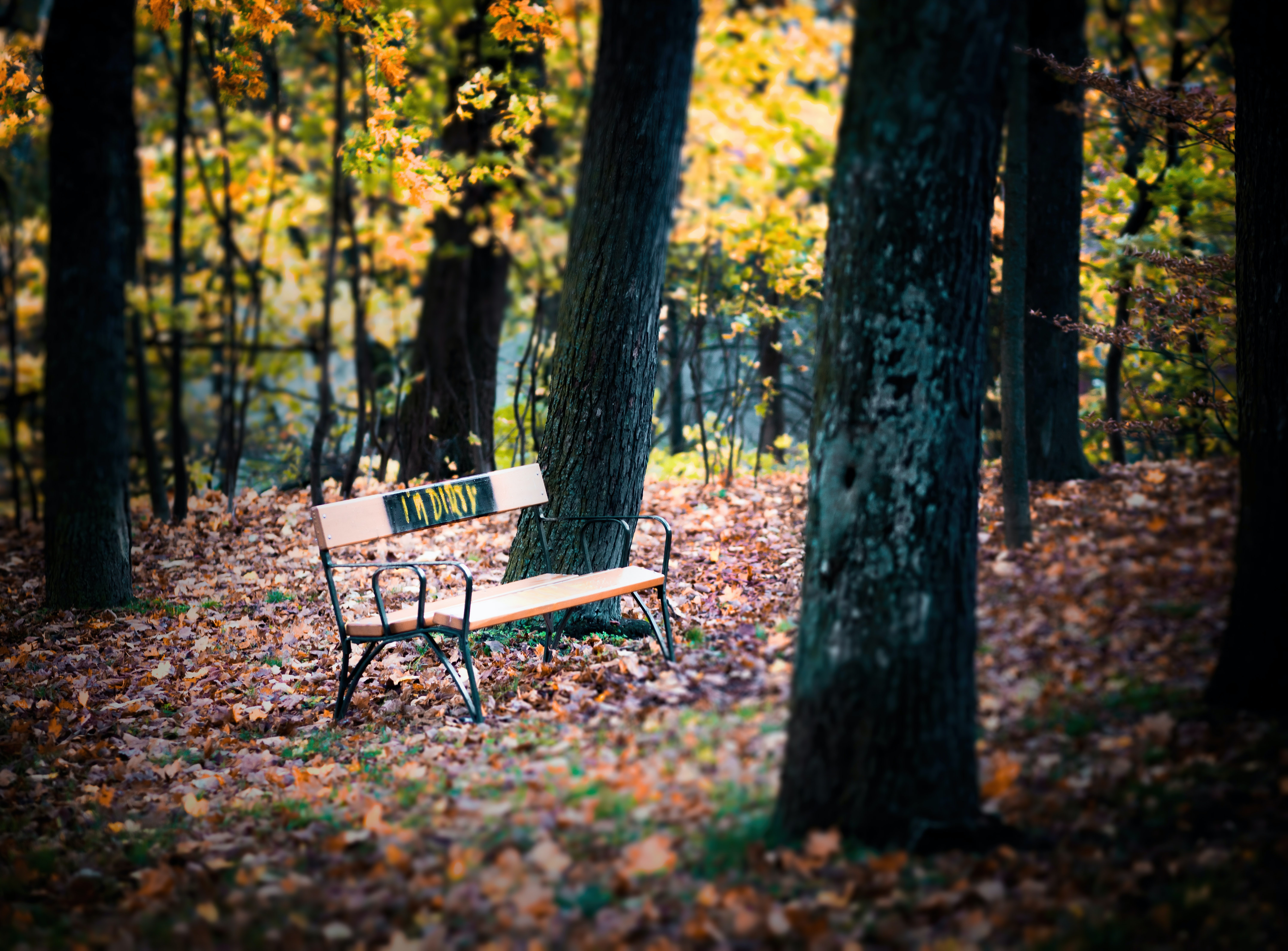 brown outdoor bench under the tree during daytime